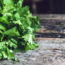 benefits of coriander leaves