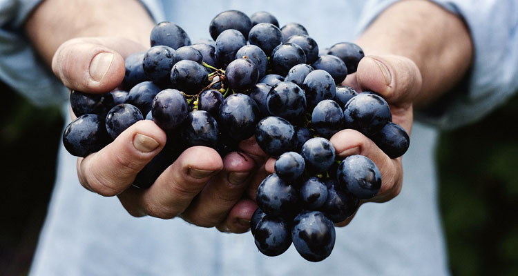 Natural Treatment For Cholesterol