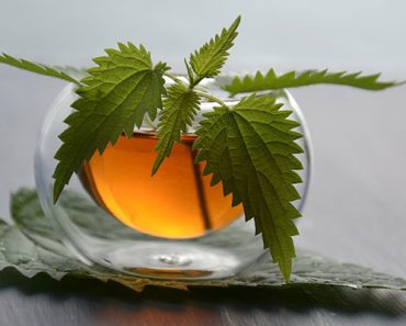 nettle tea benefits