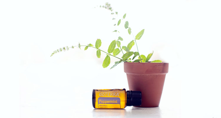 peppermint oil with carrier oil