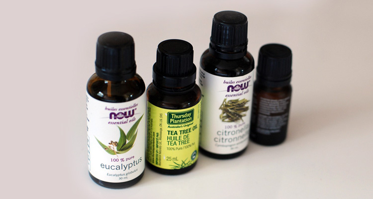 tea tree oil for lice removal